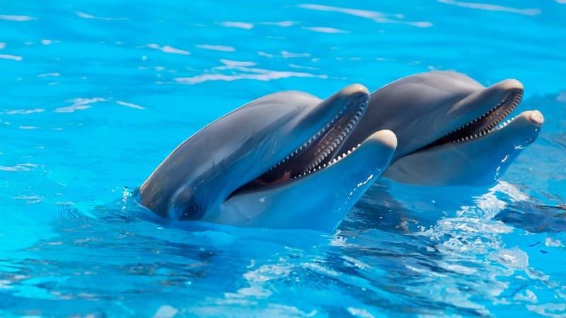 Nager avec les dauphins en Polynésie ? Très bonne idée !